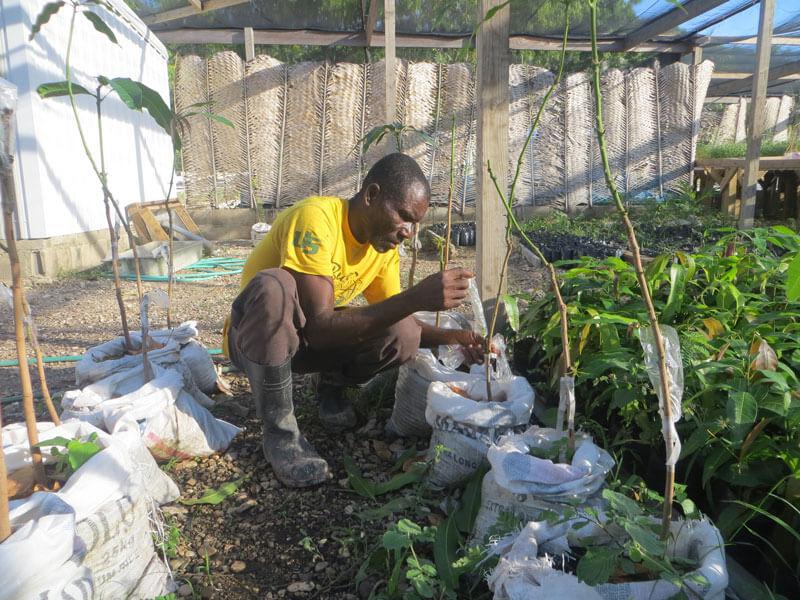 helping-reforest-haitis-barren-land