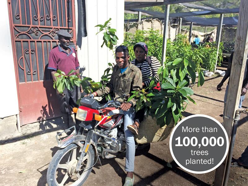 trees-healthier-haiti