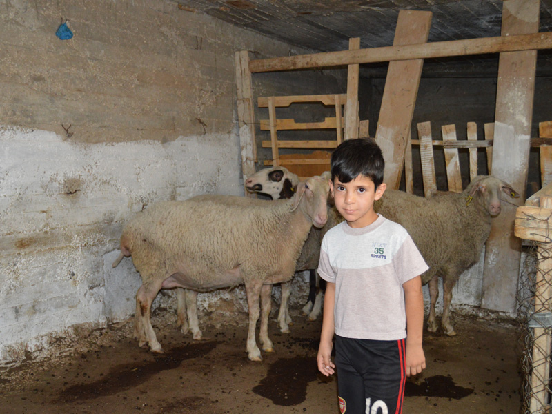 Ruba's son stands near the sheep his family purchased with Family-Self-Support funds from CAM.