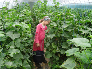 congregation, family-self-support program, greenhouse